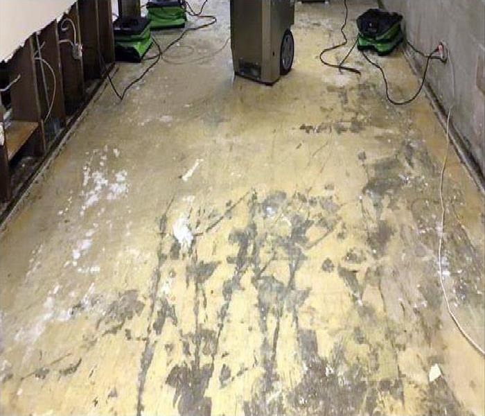 after the carpet has been ripped up, flood cuts made to the drywall, and equipment set up
