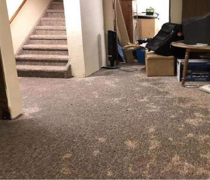 completed saturated brown carpet in a finished basement
