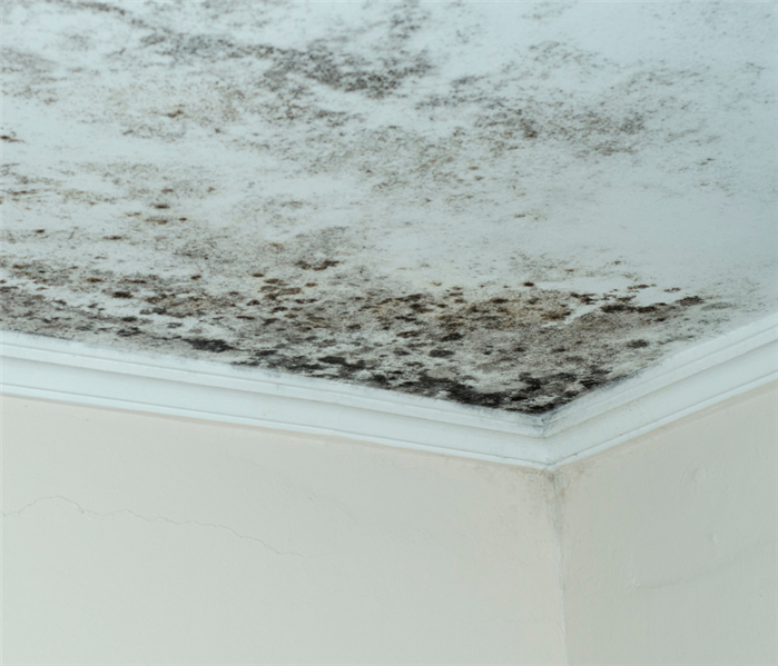 ice dam causes mold on ceiling in Lebanon, New Jersey near me